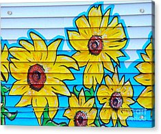 Sunflower Street Art Saint Johns Nfld Acrylic Print