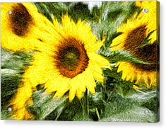 Sunflower Study 3 Acrylic Print by Mitchell Brown