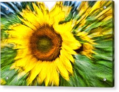Sunflower Study 4 Acrylic Print by Mitchell Brown