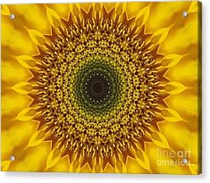 Sunflower Sunburst Acrylic Print by Annette Allman