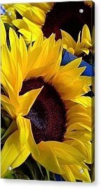 Sunflower Sunny Yellow In New Orleans Louisiana Acrylic Print by Michael Hoard