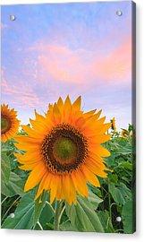 Sunflower Sunrise Acrylic Print by Bryan Bzdula