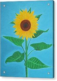 Sunflower Acrylic Print by Sven Fischer