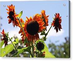 Sunflower Symphony Acrylic Print by Karen Wiles
