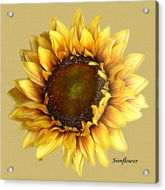 Acrylic Print featuring the digital art Sunflower by Tom Romeo