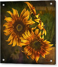 Acrylic Print featuring the photograph Sunflower Trio by Priscilla Burgers