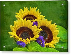 Sunflower Trio Acrylic Print by Sandi OReilly