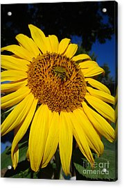 Sunflower Visitor Series 3 Acrylic Print