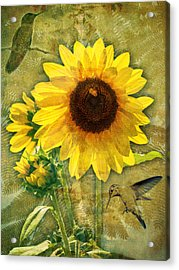 Acrylic Print featuring the photograph Sunflower With Bee Number Nineteen by Bob Coates