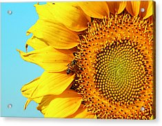 Sunflower With Bee - Photo Acrylic Print