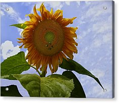 Sunflower With Busy Bees Acrylic Print by Chris Flees
