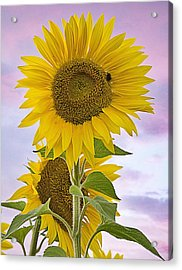 Sunflower With Colorful Evening Sky Acrylic Print