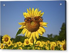 Sunflower With Sunglasses Acrylic Print