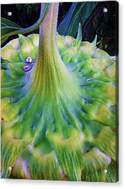 Sunflower...moonside 1 Acrylic Print by Daniel Thompson