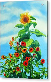 Sunflowers 2014 Acrylic Print by Mary Helmreich