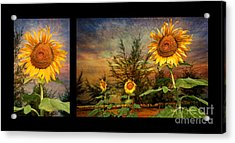 Sunflowers Acrylic Print by Adrian Evans