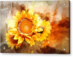 Sunflowers Aglow Acrylic Print
