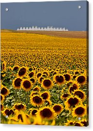 Sunflowers And Airports Acrylic Print