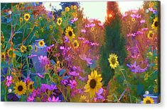 Sunflowers And Cosmos Acrylic Print