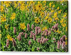 Sunflowers And Horsemint Acrylic Print