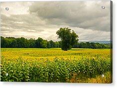 Sunflowers And The Tree Acrylic Print