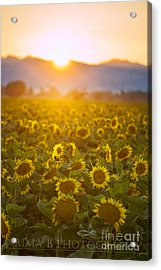Acrylic Print featuring the photograph Sunflowers At Sunset by Rima Biswas