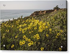 Acrylic Print featuring the photograph Sunflowers At Yucca Point by Lee Kirchhevel