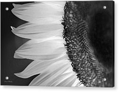 Sunflowers Beauty Black And White Acrylic Print