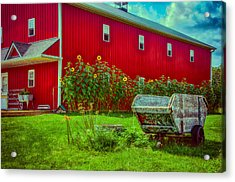 Sunflowers Beside A Big Red Barn Acrylic Print
