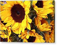Acrylic Print featuring the photograph Sunflowers by Dora Sofia Caputo Photographic Art and Design