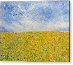 Sunflowers  Field In Texas Acrylic Print