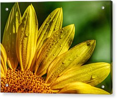 Sunflowers I Acrylic Print by Kathi Isserman