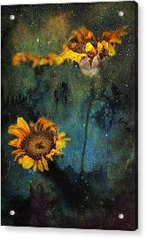Sunflowers In Night Sky Acrylic Print