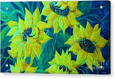Sunflowers In The Early Morning Light Acrylic Print by Eloise Schneider
