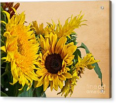 Sunflowers On Old Paper Background Art Prints Acrylic Print