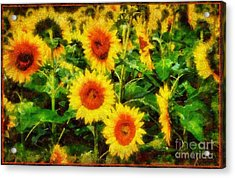 Sunflowers Parade In A Field Acrylic Print by Janine Riley