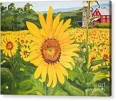 Sunflowers - Red Barn - Pennsylvania Acrylic Print