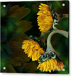 Acrylic Print featuring the photograph Sunflowers by Shirley Mangini