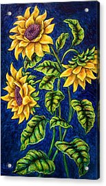 Sunflowers Acrylic Print by Sebastian Pierre