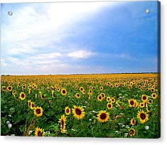 Sunflowers Acrylic Print by Thomas Leon