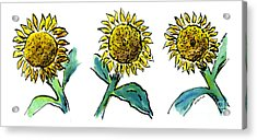 Sunflowers Trio Acrylic Print