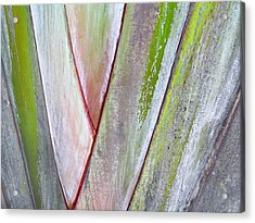 Sunken Gardens Abstract 4 Acrylic Print