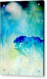 Sunkissed Hydrangeas Acrylic Print by Bonnie Bruno