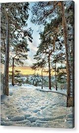 Sunkissed Trees Acrylic Print