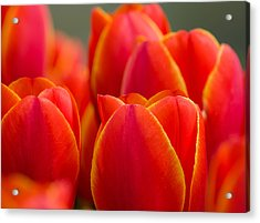 Sunkissed Tulips Acrylic Print by Jordan Blackstone