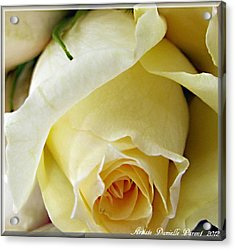 Sunkissed Yellow Rose Acrylic Print