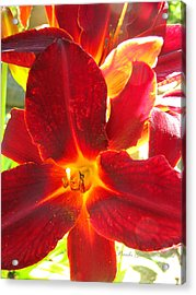 Acrylic Print featuring the photograph Sunlight And Daylilies A Match Made In Heaven by Brooks Garten Hauschild