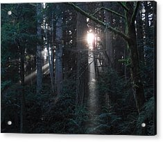 Sunlight In The Forest Acrylic Print by Karen Molenaar Terrell