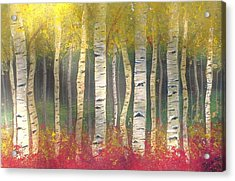 Sunlight On Aspens Acrylic Print