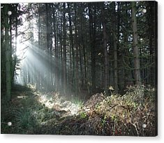 Acrylic Print featuring the photograph Sunlight On Cannock Chase by Jean Walker